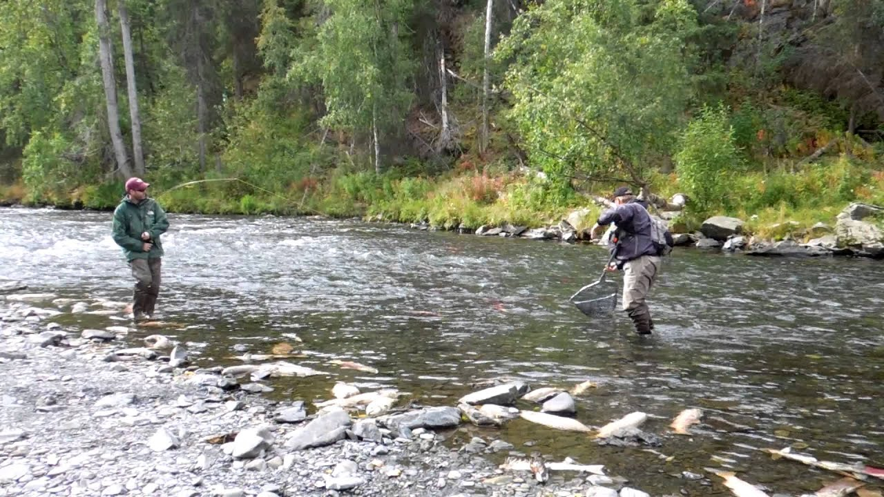 Fly Fishing Rainbow Trout On Russian River Ak Youtube