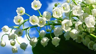 9 bunga terindah di dunia by b a t watch and free