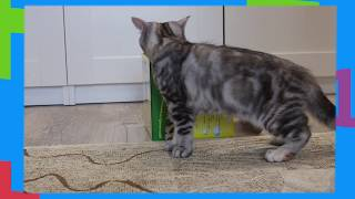 ОПАСНЫЙ НОМЕР! Котенок Лика. #8. GODIKPLUS. cat