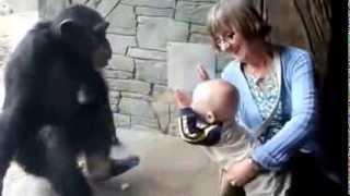 Обезьяна в зоопарке мочит приколы