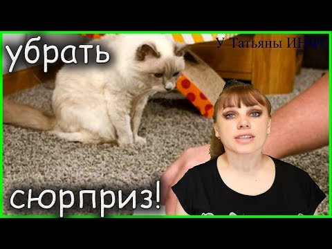 Как удалить запах кошачьей и собачей мочи с ковра?! Как убрать жвачку с волос?!