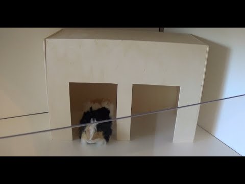 meerschweinchen haus bauen youtube. Black Bedroom Furniture Sets. Home Design Ideas