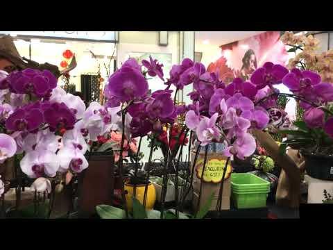 Orchid flower shop in Sunway Pyramid Shopping Mall,  (Subang Jaya. Malaysia)