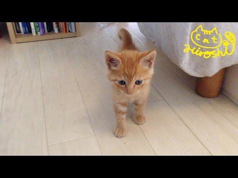 茶トラ子猫拾った翌朝 ベッドの下から恐る恐る可愛い↑↑ / Sleepy cat Hiroshi:  Grumpy morning