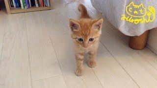 茶トラ子猫拾った翌朝 ベッドの下から恐る恐る可愛い↑↑ / Sleepy cat Hiroshi:  Grumpy morning thumbnail