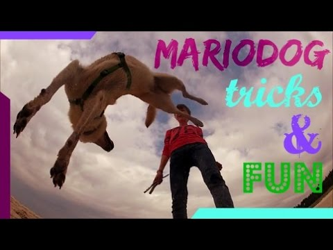 Mariodog - tricks & fun :D  |  DOG TRICKS
