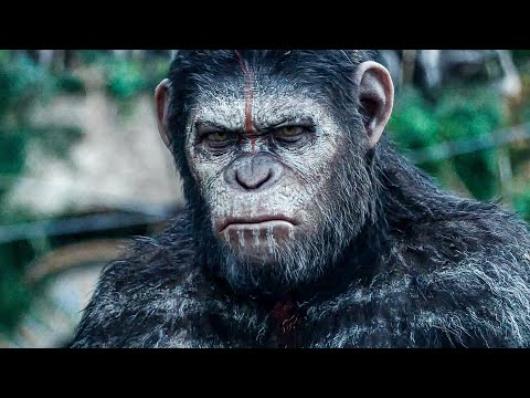 Apes Don't Want War! Scene - DAWN OF THE PLANET OF THE APES (2014) Movie Clip