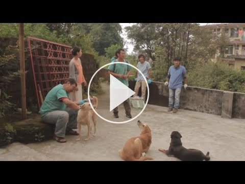 2013 Tibet Charity India 10 day Rabies Vaccination Program