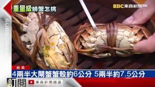 秋蟹「重」教戰! 蟹殼直徑就能辨別斤兩多重