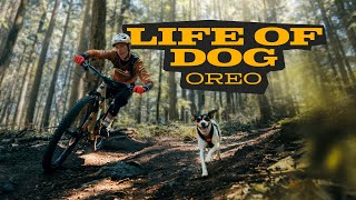 THOUGHTS OF A TRAIL DOG     Oreo & Jasper Jauch   powered by Julius-K9