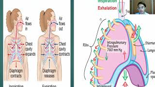 Asuhan Keperawatan TB Paru.