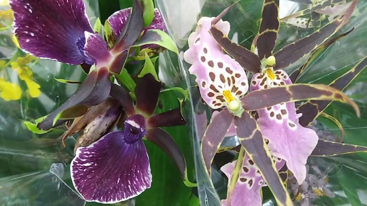 Комнатные цветы. Прогулка по цветочному отделу в Леруа Мерлен.