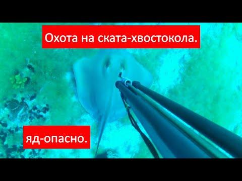 Вопрос: Чем могут быть опасны морские скаты?