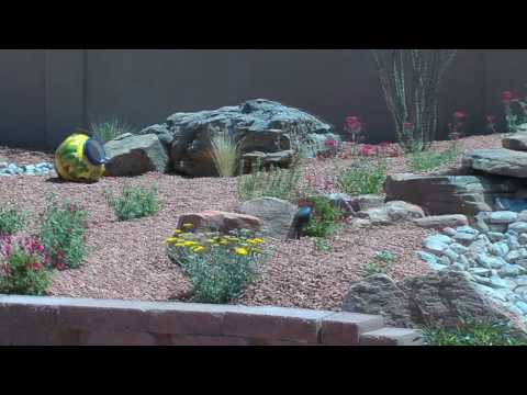 Albuquerque Landscaping trends:  Michael's Landscaping explains what's hot