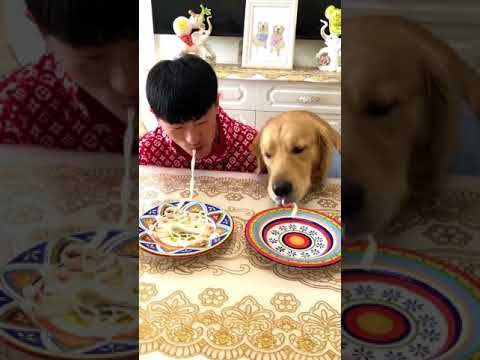 dog Eat noodles competition - [Tik Tok in China]