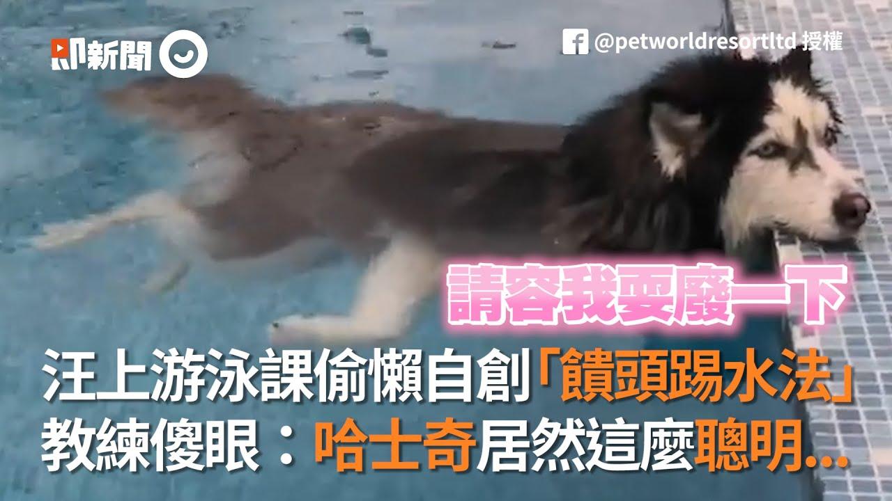 汪上游泳課偷懶自創「饋頭踢水法」 教練傻眼:哈士奇居然這麼聰明...│寵物│狗狗
