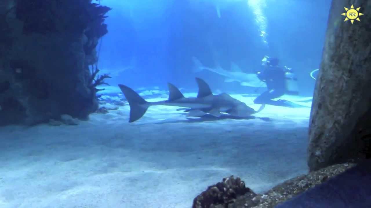 Newport Aquarium Kentucky - YouTube