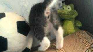 Кошка Юна изучает новый дом