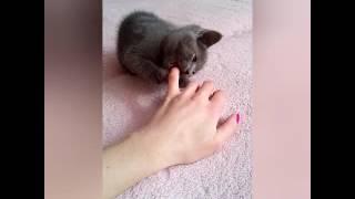 Котята. Серая масса