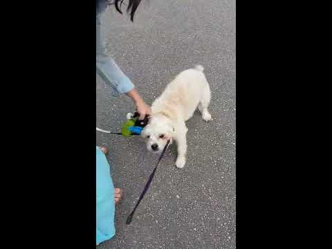 crazy-woman-kicking-dog-in-vancouver
