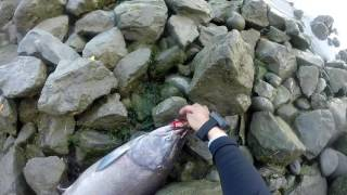 salmon fishing sacramento river