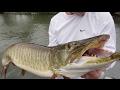 Bass Fisherman Battle Multiple GIANT Muskies On SWIMBAITS