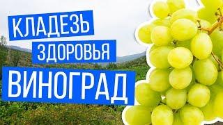 Кладезь здоровья виноград | Рецепты Ивана Павловича Неумывакина