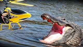 RC heli vs. Alligator - what happens? NOT a prank but an experiment!!
