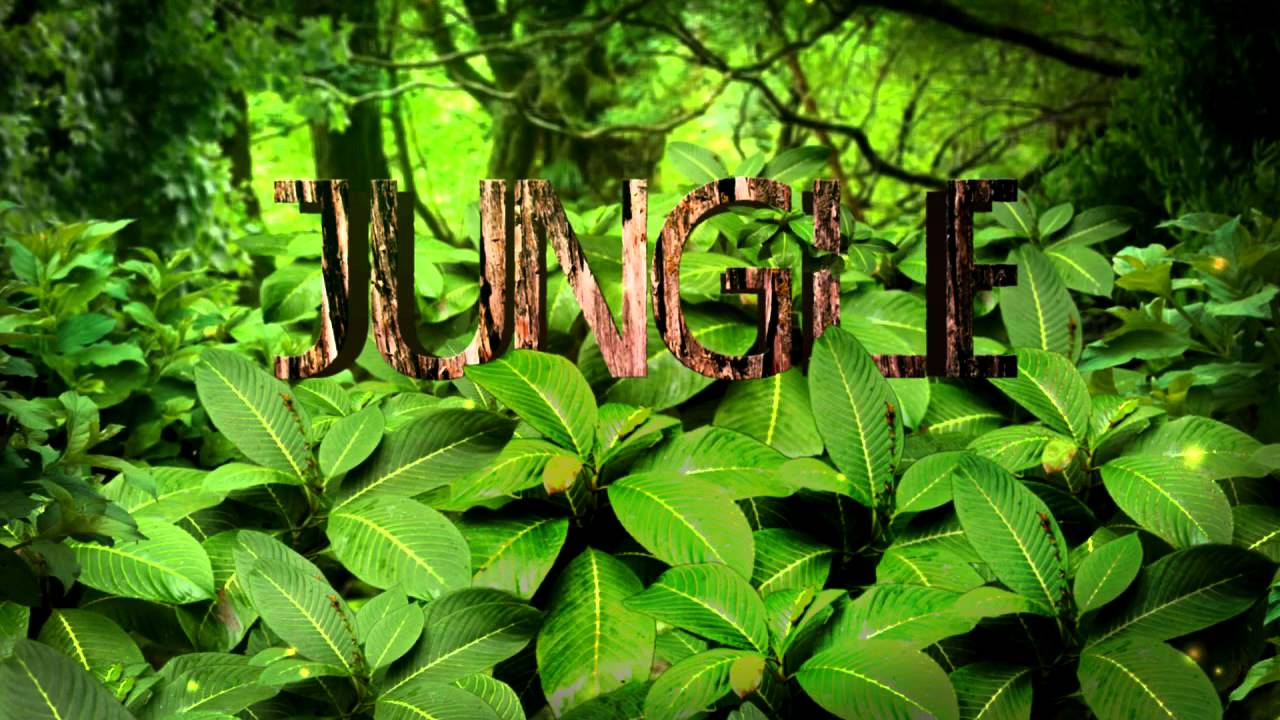 After Effects Jungle Template Download Youtube