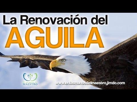 Reflexiones Cristianas La Renovación Del águila Reflexiones De La Vida En Hd