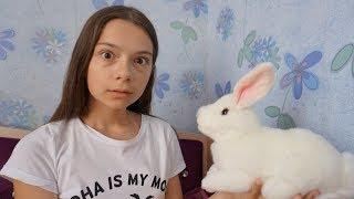 Кукла Аннабель в реальной жизни превратила кролика Лялю в ИГРУШКУ
