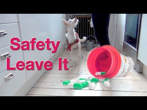The safety leave it!  - clicker dog training
