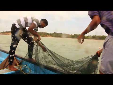 Deep South Trinidad Shrimp fishing part 2