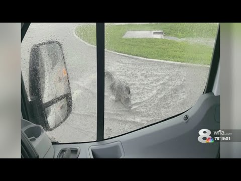 Brody - Gator spotted on Pinellas County Road