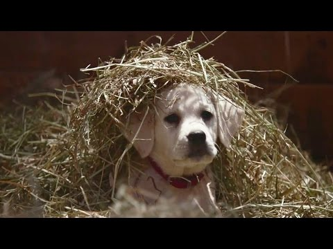 """Budweiser """"Lost Dog"""" Superbowl 2015 Commercial THE FEELS"""