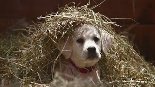 "Budweiser ""Lost Dog"" Superbowl 2015 Commercial THE FEELS"