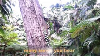 DEEP IN THE FOREST OF MT TAMBORINE BOTANIC GARDENS