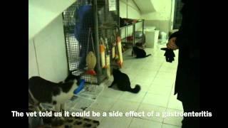 Roman Cats - Version 2