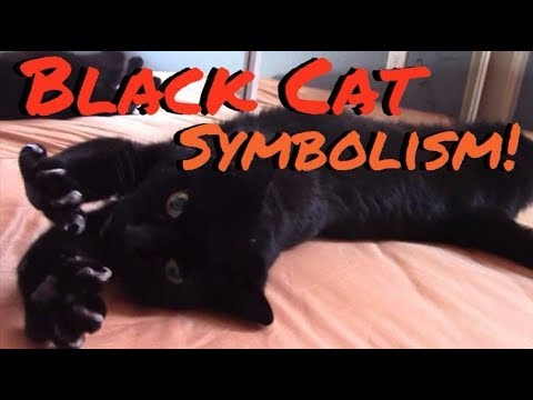 Black Cat Symbolism 1331 Days Of Samhain Youtube