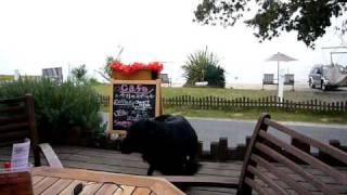 琵琶湖前のR CAFEでAndyと一緒にのーんびり。レオンベルガーのRちゃんも...