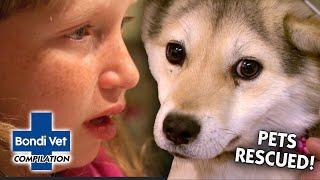 MOST EMOTIONAL PET RESCUES  | Compilation | Bondi Vet