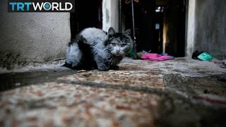 The War in Syria: Hundreds of Aleppo's cats saved by 'Cat man'