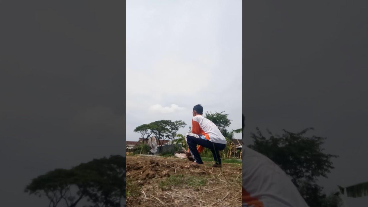 Latih Sprint Merpati Balap