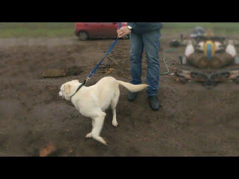 ��Двое мужчин вытолкали собаку из авто и стали БИТЬ своего питомца...