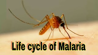 Life cycle of malaria in humans and Mosquito ||Ncert|| NEET || Prevention and cure