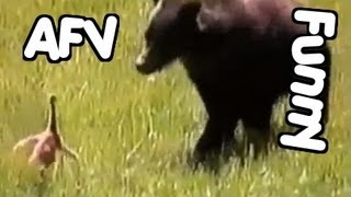 ☺ AFV Part 241 - America's Funniest Home Videos (Funny Clips Fail Montage Compilation)