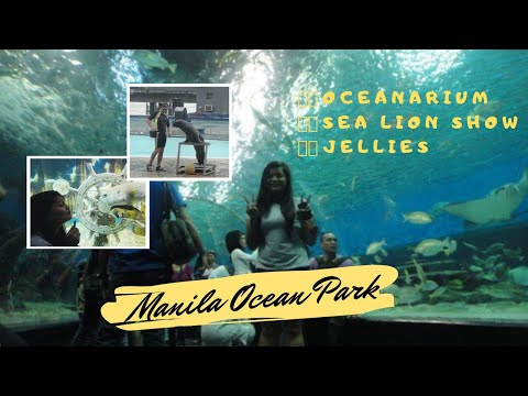 Manila Ocean Park Adventure (Oceanarium, Sea Lion Show and Jellies)