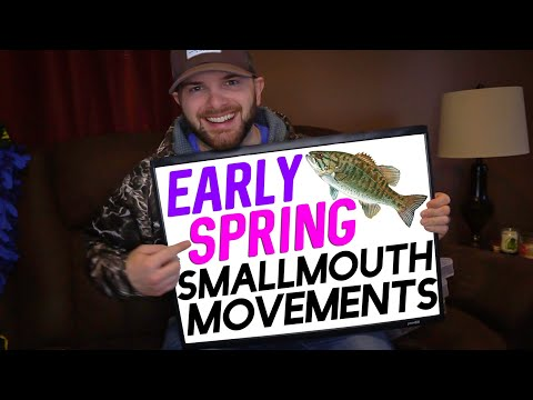 Early Spring Smallmouth Movements Explained (Where Do They Go?)