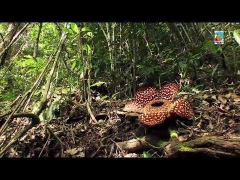 Sabah Malaysia Borneo