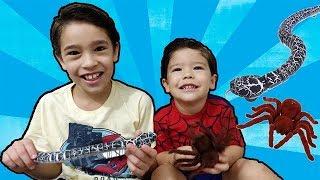 COBRA vs ARANHA de Brinquedo de Controle Remoto | Crianças brincando